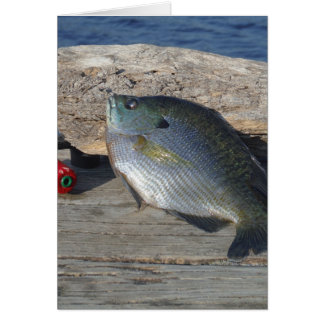 Blue Gill on the Dock Card