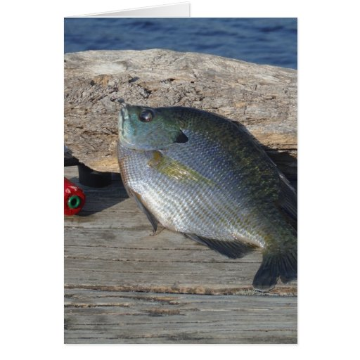 Blue Gill on the Dock Greeting Card