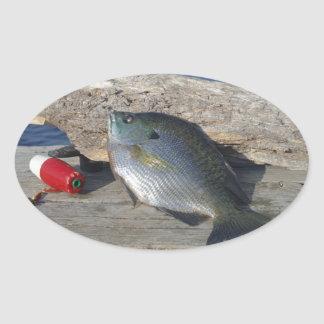 Blue Gill on the Dock Oval Sticker