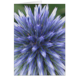 Blue Globe Thistle Card