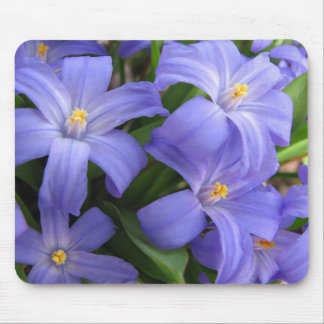 Blue Glory of the Snow Flowers Mouse Pad