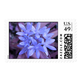 Blue Glory Of The Snow US Postage Stamp
