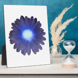 Blue Glow Marigold Plaque