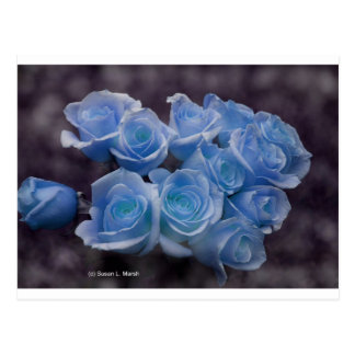 Blue glowing roses against a dark background postcard