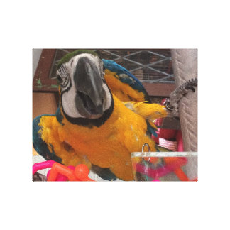 Blue & Gold Macaw Canvas Print