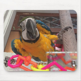 Blue & Gold Macaw Mouse Pad! Mouse Pad