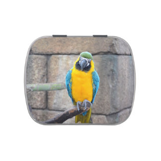 blue gold macaw on perch front view parrot jelly belly candy tin