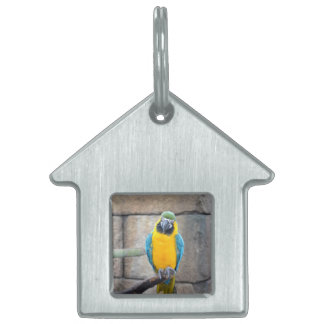 blue gold macaw on perch front view parrot pet tag
