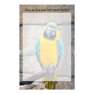 blue gold macaw on perch front view parrot stationery