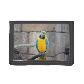 blue gold macaw on perch front view parrot tri-fold wallets