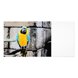 blue gold macaw on perch paintery parrot photo card template