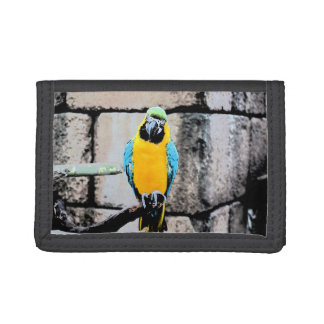 blue gold macaw on perch paintery parrot trifold wallet