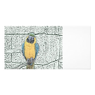 blue gold macaw on perch watercolor photo cards