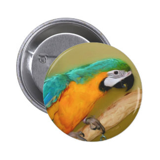 Blue Gold Macaw Parrot Animal Button