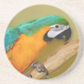 Blue Gold Macaw Parrot Animal Coaster