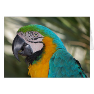 Blue & Gold Macaw Parrot Card