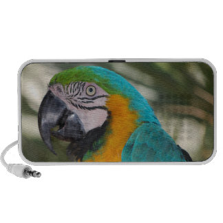 Blue & Gold Macaw Parrot Doodle Speakers