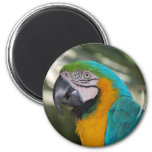 Blue & Gold Macaw Parrot Magnet