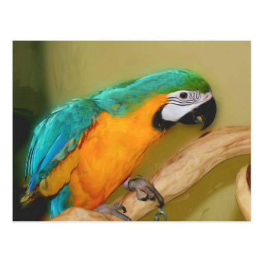 Blue Gold Macaw Parrot Painting Animal Postcard