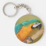 Blue Gold Macaw Parrot Painting Keychain