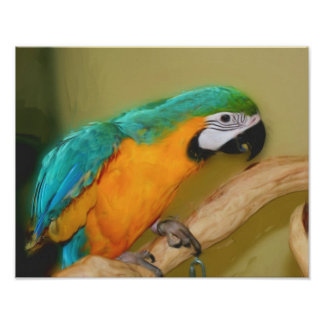 Blue Gold Macaw Parrot Photo Painting Poster