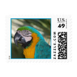 Blue & Gold Macaw Parrot Postage