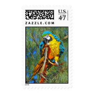 Blue & Gold Macaw Stamp