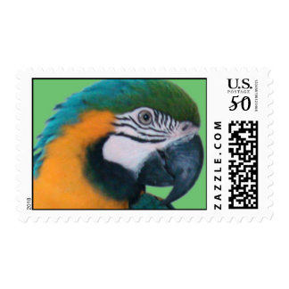 Blue & Gold Macaw Stamps