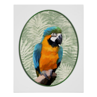 Blue & Gold Macaw with Jungle Background Poster