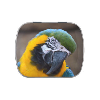 blue gold parrot macaw head tilted candy tin
