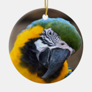 blue gold parrot macaw head tilted christmas tree ornaments