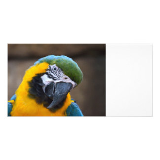blue gold parrot macaw head tilted personalized photo card