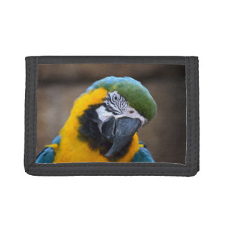 blue gold parrot macaw head tilted tri-fold wallets