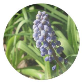 Blue Grape Hyacinth Plate