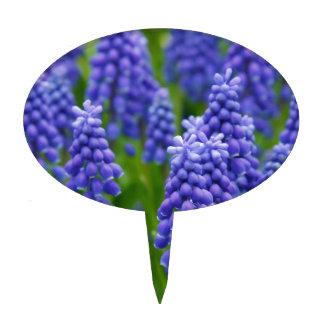 Blue Grape Hyacinths Cake Toppers