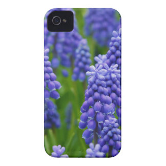 Blue Grape Hyacinths iPhone 4 Cover
