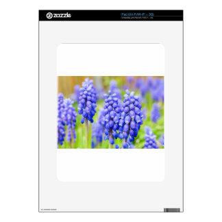 Blue grape hyacinths iPad skins