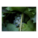 Blue Grapes Greeting Cards
