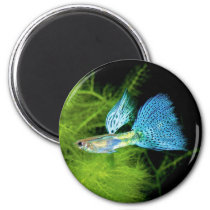 Blue Grass Guppy Magnet