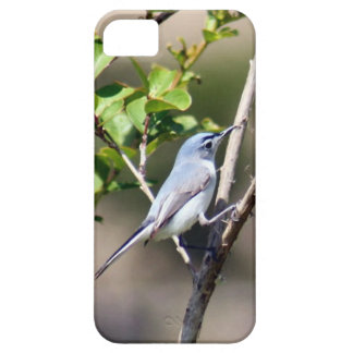 Blue Gray Gnatcatcher Bird iPhone SE/5/5s Case