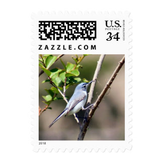 Blue-gray Gnatcatcher Bird Postage Stamps