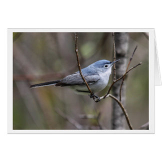 Blue-gray Gnatcatcher Card