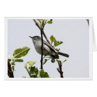 Blue-gray Gnatcatcher Card