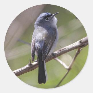 Blue-gray Gnatcatcher Classic Round Sticker