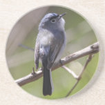 Blue-gray Gnatcatcher Drink Coasters