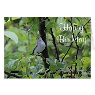 Blue gray gnatcatcher fledgling card