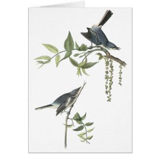 Blue-gray Gnatcatcher, John Audubon Card