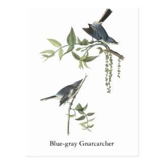 Blue-gray Gnatcatcher, John Audubon Postcard