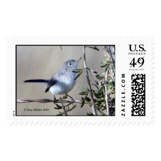 BLUE-GRAY GNATCATCHER,  Kay Miller 2007 Postage Stamp
