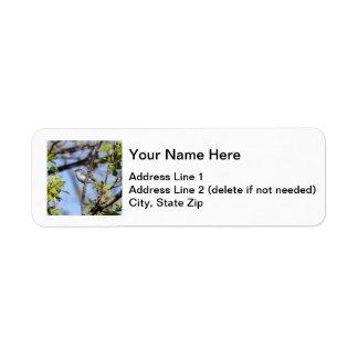 Blue-gray Gnatcatcher Label